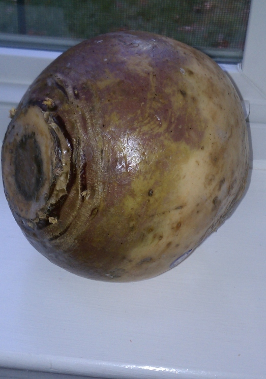 To the novice author, this is a rutabaga on a window sill.  To the seasoned story-teller, this is a sexy orb of starchy desire.  Its pale orange skin and bruise-colored markings just need a little lace and maybe a sharp knife.