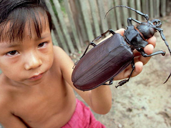4 pets that are safe for your children to own: Beetles can not harm your kids