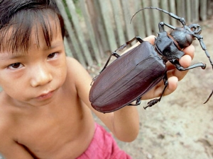 This poor kid has a giant bug for a pet.  He used to have a cat, but the bug ate it.  (Image from themorningstarr dot co dot uk)